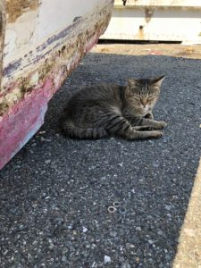 イメージ:相島cat