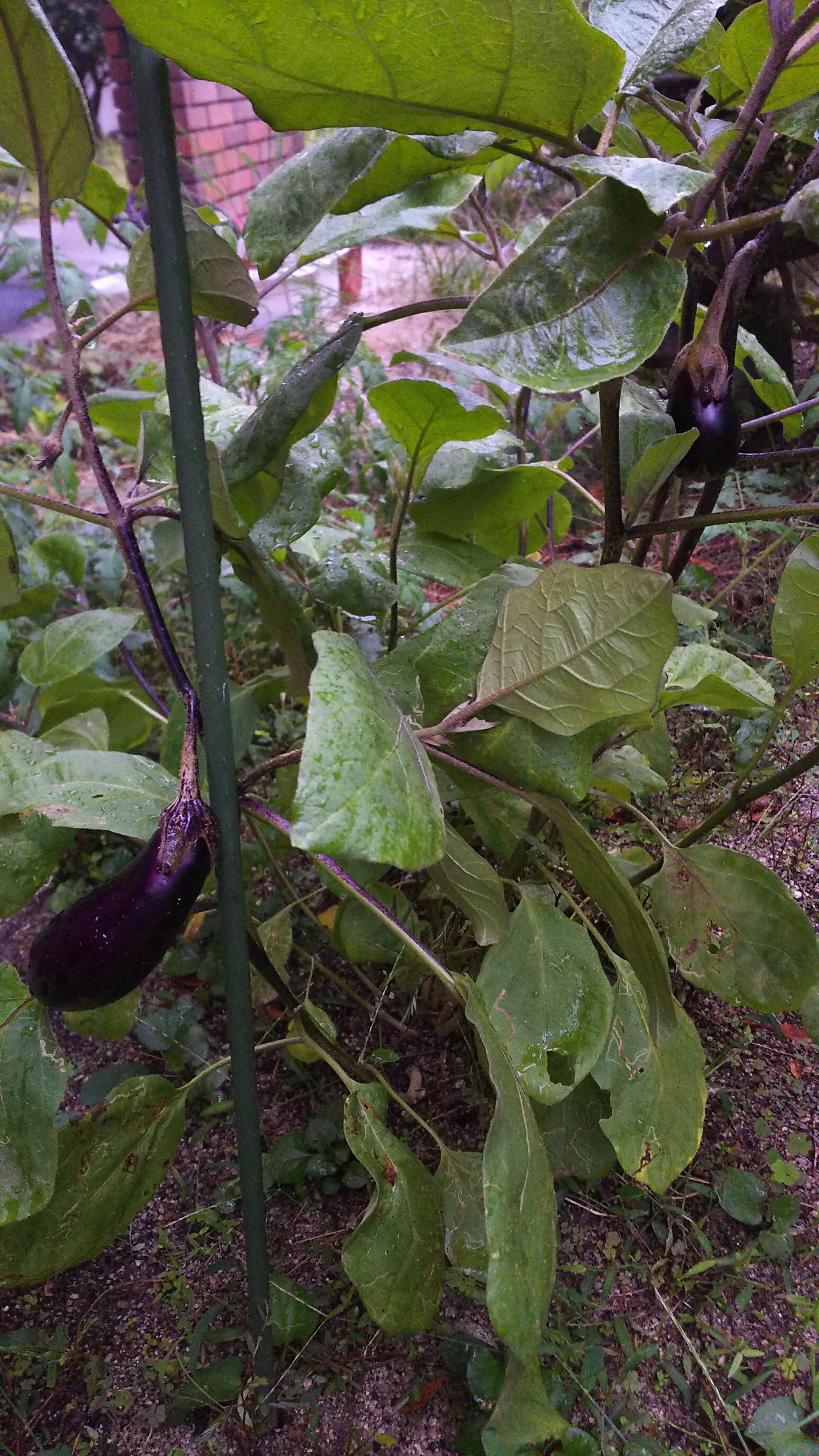 イメージ:家庭菜園