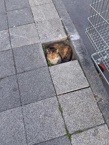 イメージ:ネコ