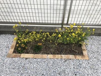 イメージ:我が家の花壇