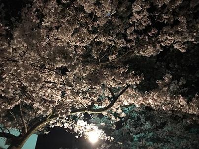 イメージ:夜桜