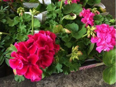 イメージ:花