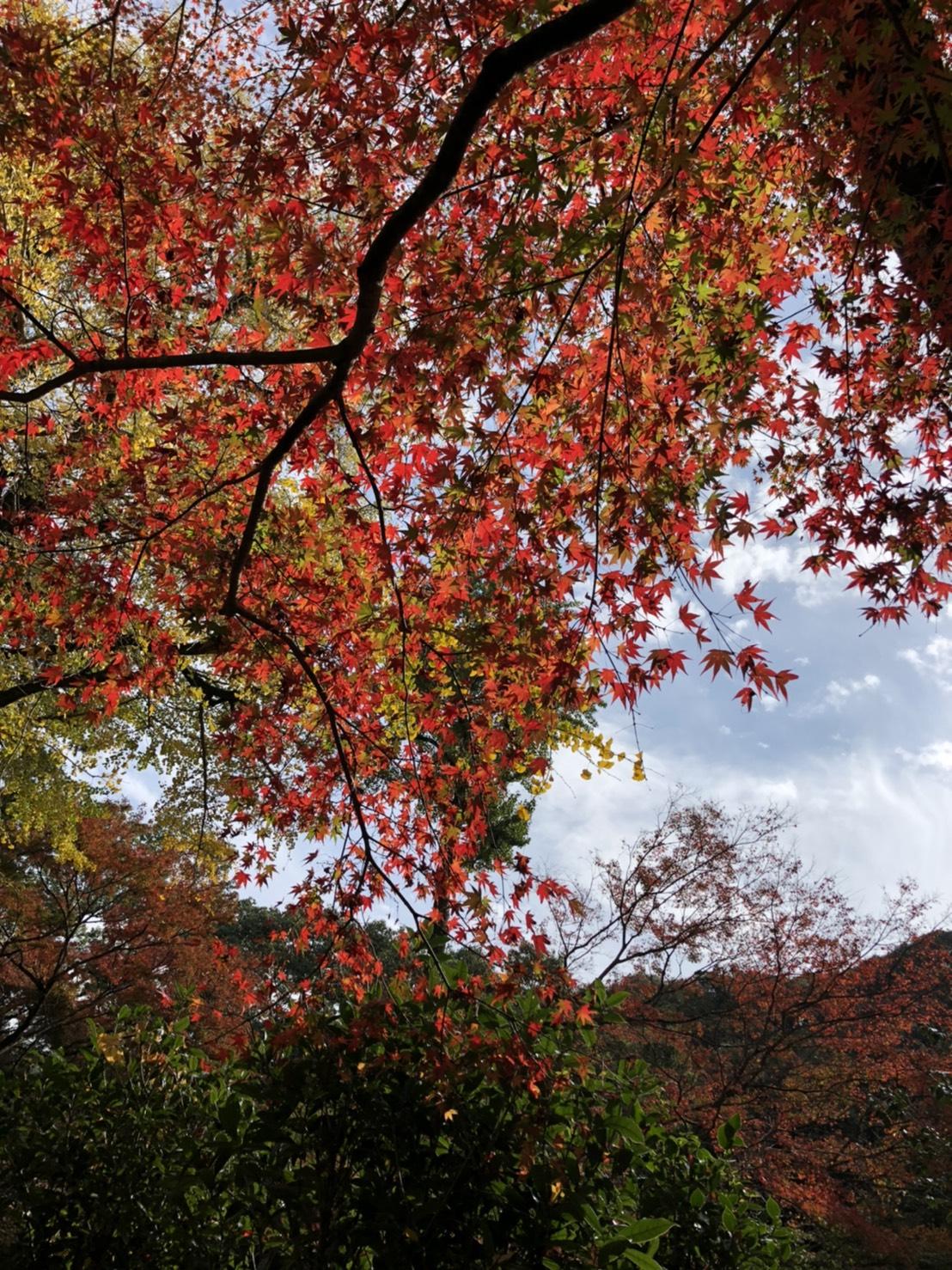 イメージ:気持ちの良い秋