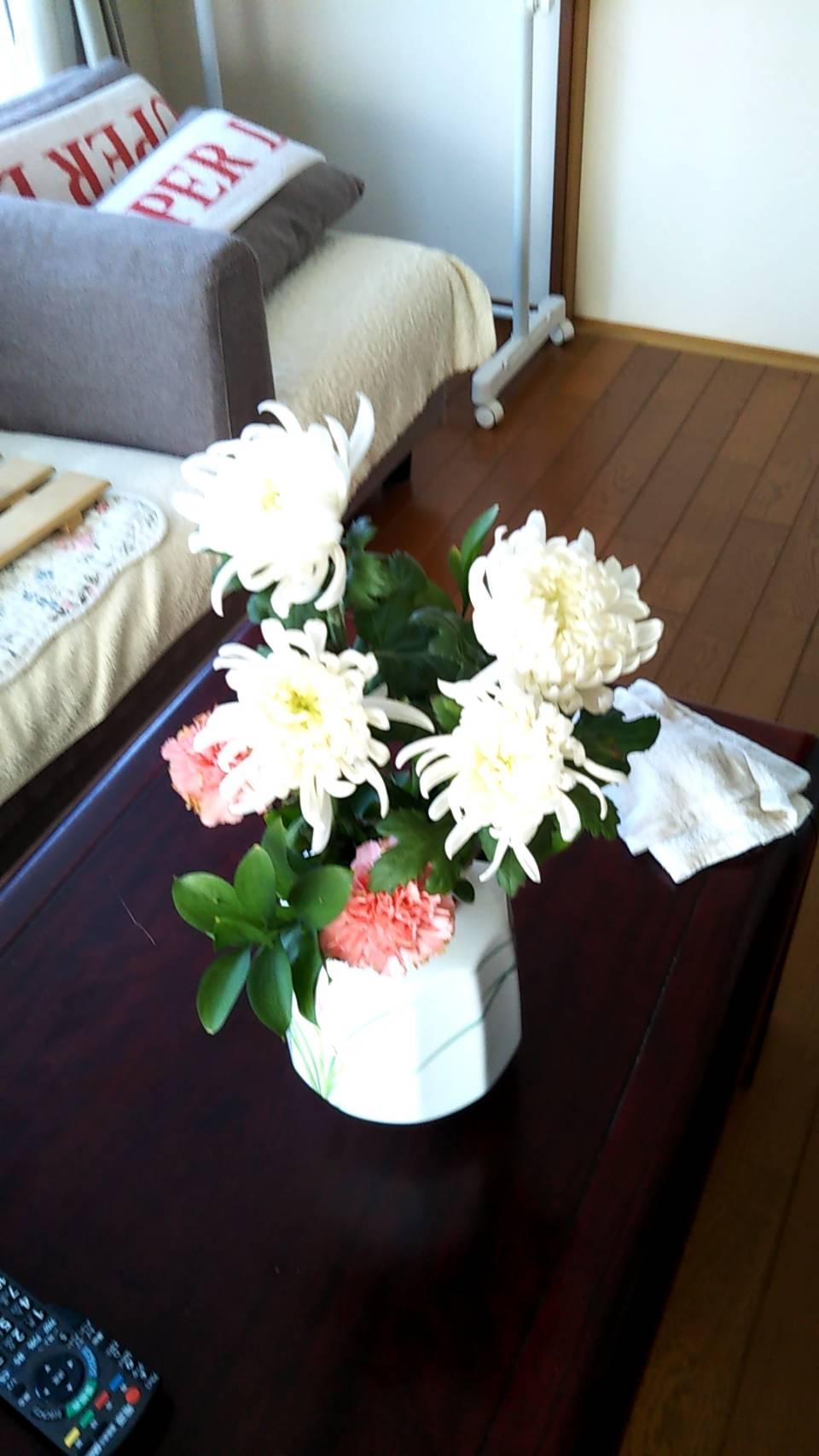 イメージ:あおやぎのお花
