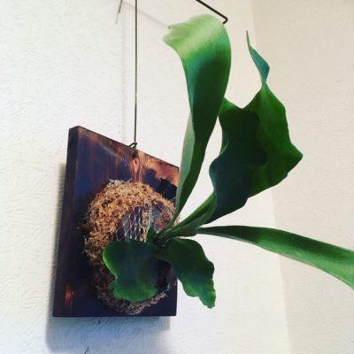 写真:観葉植物