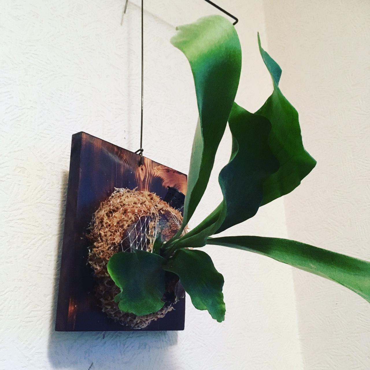 イメージ:観葉植物
