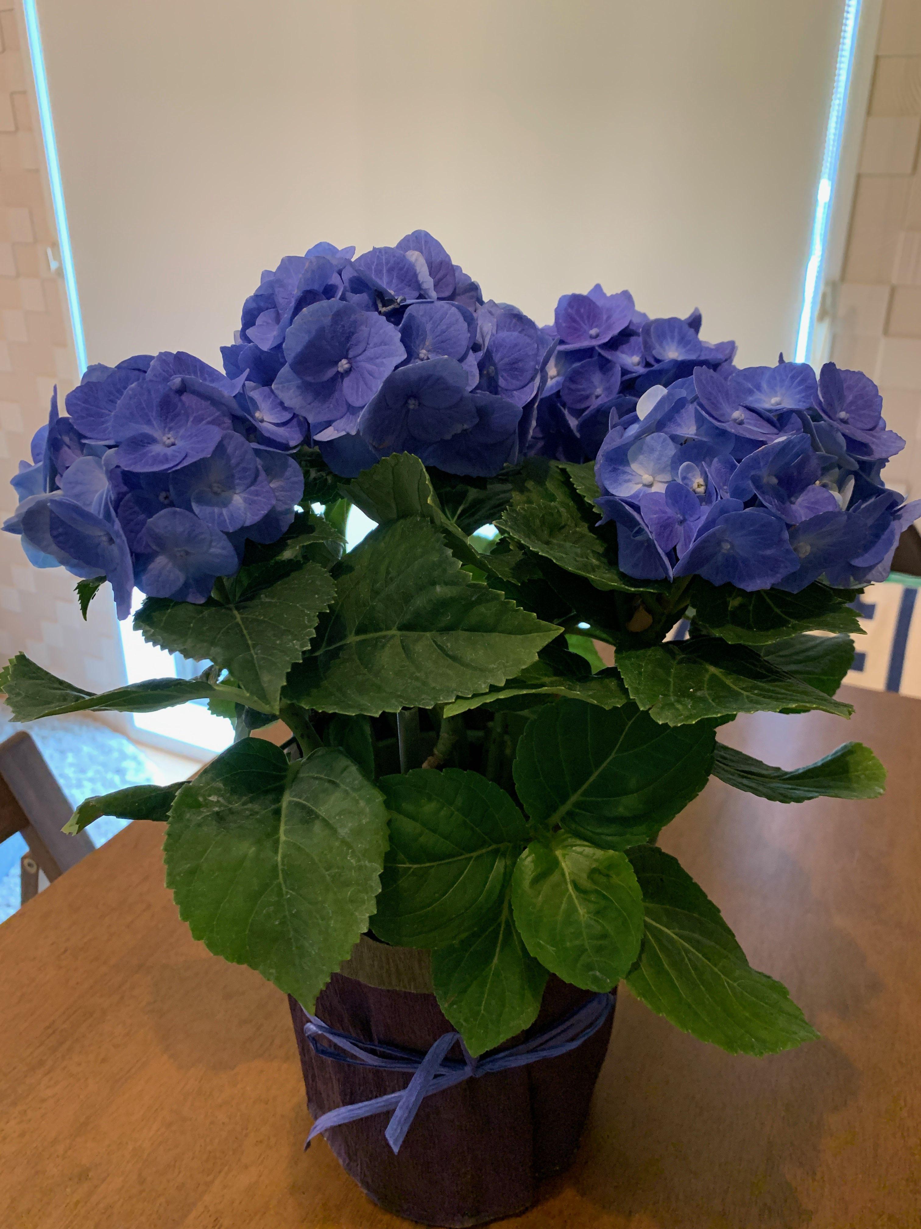 イメージ:紫陽花